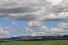 Plains of Masai Mara (www.JnyAroundTheWorld.com - Pictures & Travels) Tags: africa afrique kenya animals fauna wildlife masaimara nationalpark wetseason greenseason landscape sky cloud tree canon jnyaroundtheworld jenniferlavoura