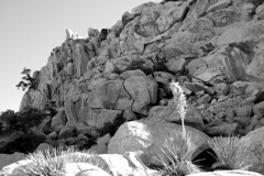 Lost Horse, Joshua Tree National Park, 30 December 2015 (matt-artz) Tags: blackandwhite bw landscape desert joshuatree joshuatreenationalpark