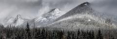 Snoqualmie Pass (Bill Devlin) Tags: trees winter light white mountain snow black mountains guy fog clouds triangles washington pass peak cascades peaks snoqualmie hyak