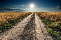 Through the vast (Radisa Zivkovic) Tags: road sky cloud sun rural track path serbia dirt crops agriculture plain vastness gravelwheat titelhill