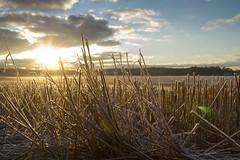 Skrdat (Dencku) Tags: sky cloud sun sol nature field suomi finland landscape frost natur himmel maisema luonto ker landskap moln aurinko pilvi porkala taivas kirkkonummi pelto porkkala kyrksltt huurtua