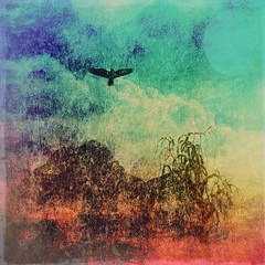 Phoenix (Swissrock) Tags: bird texture phoenix clouds photoshop digitalart fantasy brushes february deviantart photoart challenge lightroom digitalpaint 2016 photomatix pixlr