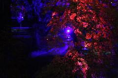 IMG_3131 (Katie Abruzzi) Tags: pink net lights republic purple czech prague multimedia signalfestival