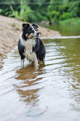 Juju (mcvmjr1971) Tags: travel dog beach brasil swim fun 50mm nikon collie play sopaulo border cachorro viagem litoralnorte sosebastio barradouna f18d lensnikkor d7000 mmoraes
