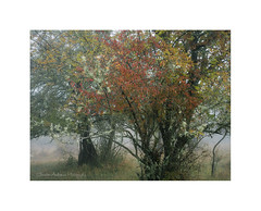 Trees in mist (Christos Andronis) Tags: red mist green fog mystery peaceful minimal woodlandstrees
