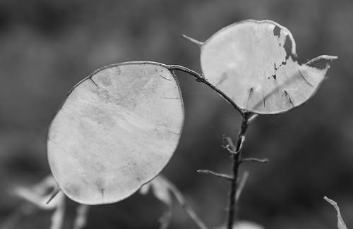 Winter - revisited ©  Still ePsiLoN