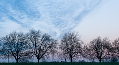 28 Blue Hour (SamKirk9) Tags: trees winter sky cloud sunrise bluehour brockley dogwalker hillyfields 116picturesin2016 28bluehour