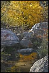 Autumn: Sabino Canyon 2015 #21 (hamsiksa) Tags: trees arizona color fall water creek landscape tucson canyon fallfoliage foliage boulders sonorandesert coronadonationalforest strean autumncolor atumn santacatalinamountains pimacounty sabinocanyonnationalrecreationarea