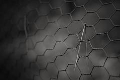 Split (Bilderwense) Tags: blackandwhite bw black detail blancoynegro monochrome fence 50mm nikon dof noiretblanc bokeh depthoffield sw shallow monochrom nikkor schwarzweiss zaun vignetting vignette bnw shallowdepthoffield 50mmf18 gefangen nikkor50mm einfarbig schwarzweis tiefenunschrfe smoothbokeh bokehlicious softbokeh d5000 bokehrama nikond5000 fencedfriday