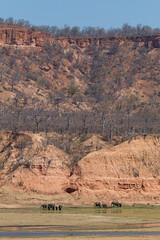 Elephant and the Chilojo Cliffs (Hector16) Tags: africa safari zimbabwe zw 2015 masvingo gonarezhou chilojo runderiver chilojocliffs chilogorgelodge