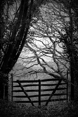 036.365.2016 (johnny the cow) Tags: blackandwhite monochrome field wales rural photo wooden gate diary rustic cymru aberystwyth collection 365 bog catalogue ceredigion newcross 2016 aphotoaday 366 ygors
