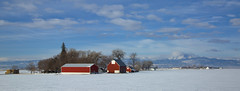 until spring (eDDie_TK) Tags: rural colorado weld farming barns co farms frontrange redbarns rurallife ruralliving weldcounty whitebarns weldcountyco frontrangeco