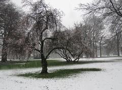 Apeldoorn (Elisa1880) Tags: trees snow netherlands bomen sneeuw nederland apeldoorn