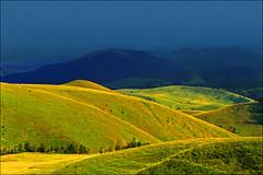 White flock (Katarina 2353) Tags: mountain film landscape nikon serbia srbija photopainting zlatibor katarinastefanovic katarina2353 galerijablueplanet