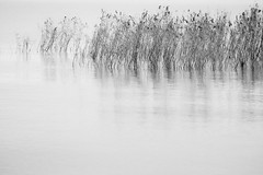 Fluctuations (HarQ Photography) Tags: blackandwhite monochrome fujifilm xt1 bestcapturesaoi elitegalleryaoi xf50150mmf28rlmoiswr