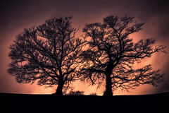 Ethereal Trees (dommylive) Tags: trees light silhouette adobephotoshop ethereal topazlabs