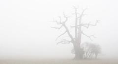 The Midhurst Fog (Simon Verrall) Tags: winter mist tree silhouette fog landscape sussex march oak midhurst petworth 2016 cowdray a272