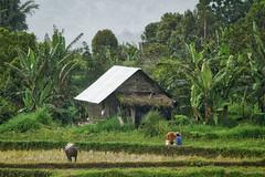 Tanah Datar Regency (tehhanlin) Tags: indonesia landscape sony ngc ibis bukittinggi padang novotel pagaruyung minangkabau jamgadang lembahharau westsumatera batusangkar tanahdatar ngaraisianok padangpanjang sal70400g pacujawi padangpariaman variotessar16354za a7r2 a7rm2