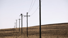 Dry (__Jase__) Tags: summer hot field country dry powerlines heat fields outback minimalist telegraphpoles cooma