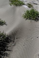 Black sand patterns 2 (bichane) Tags: canada black west beach coast sand bc britishcolumbia patterns vancouverisland tofino windblown
