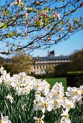 Spring is coming (lucapascotto) Tags: paris film 50mm t3 manualfocus analogic filmphotography f17 portra160 manualexposure konicaautoreflex konicahenanon