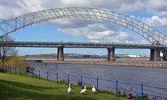 Runcorn Bridge (Majorshots) Tags: cheshire runcorn merseyside trentandmerseycanal halton rivermersey runcornbridge