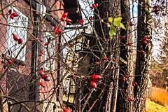 Krompach (trekkpics) Tags: mountains berg schweiz tiere nationalpark czech outdoor pflanze pflanzen bad eisenbahn bahnhof tschechien bier e3 czechmountains trasa bahn budweiser wald baum wandern brna burg louka deutsche felsen gebirge schsische lausitz dn hensko bergsteigen zittauer hory bhmen oberlausitz waltersdorf lausche oybin elbsandstein prebischtor snnk bhmische europischer schandau lausitzer hochwald esk vcarsko fernwanderweg stezka toltejn pravick evropsk luick tannenberg jedlov hochwaldbaude gabrielensteig lu mezn gabrielina dlkov kammloch