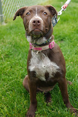Minnie_01 (AbbyB.) Tags: rescue dog pet newjersey canine shelter adopt shelterpet petphotography easthanovernj mtpleasantanimalshelter