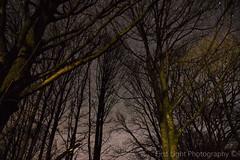 Night Sky Over Esthwaite (First_Light_Photography) Tags: trees sky lake night dark stars star district clear astrophotography cumbria ambleside hawkshead esthwaite