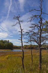 Bare trees by a river in fall (mistahmilla) Tags: autumn trees sky fall me water river season outdoors bare maine newengland foliage marsh op saltmarsh oceanpark oceanwood