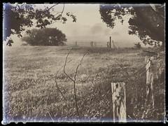 Mystified (YAZMDG (15,000 images)) Tags: mist sepia rural fence mono australia nsw barbwire edits fenceline mullumbimby paddocks mystified mistylandscapes snapseed monochromaticmonochrome