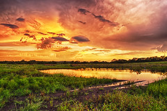 Wetlands Green & Gold (Kansas Poetry (Patrick)) Tags: sunset nature water lawrence wetlands boardwalk wakarusa lawrencekansas bakerwetlands wakarusawetlands wakarusariver patrickemerson patricklovesnancy