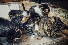 Tired (Melissa Maples) Tags: cameraphone cats apple animals turkey spring asia babies trkiye kittens antalya tessa kitties tess iphone  iphone6