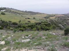 Cactus Wren Survey 2016 (William Cullen) Tags: cactuswren ranchopalosverdes coastalsagescrub palosverdespeninsulalandconservancy williamcullen portuguesebendreserve portuguesebendnaturepreserve