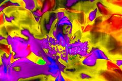 Orquidea desfragmentada (seguicollar) Tags: flower planta flor amarillo vegetal imagencreativa virginiasegu phtomanipulacin