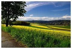 20160424-164251 (lichtschattenjaeger) Tags: yellow landscape gold diesel bio eifel gelb raps biodiesel vulkan getreide gerste weizen benzin hafer biosprit