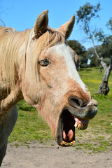 MEMEFACE. (Darren Johnson / iDJ Photography) Tags: portrait horse funnyface portugal face darren animal laughing mouth happy photography photo nikon funny image photos teeth johnson images meme photograph laugh idj capture viral idjphotography