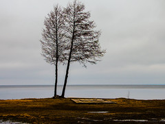 Moments unwritten (Joni Mansikka) Tags: trees light lake nature suomi finland spring outdoor pale shore lakescape ylne