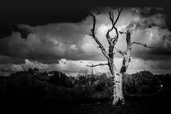 Lonely Tree (upenn97) Tags: old uk sunset england sky blackandwhite bw cold tree london english broken nature monochrome field birds composition contrast dark landscape dead daylight blackwhite emotion cloudy outdoor farm branches sony debris ngc perspective dramatic surreal dry naturallight story trunk serene lonely dried emotional decomposition dying striking treeline highlight middlesex depth a7 snag nationalgeographic harrow mortality stormyclouds pinner lifeless coarse carlzeiss heartless
