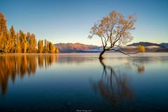 Wanaka Tree (shaunyoung365) Tags: new lake tree water zeiss sunrise landscape sony zealand wanaka