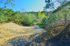 Lommel Eitjesberg (eddy.vanransbeeck) Tags: natuur bos heide lommel