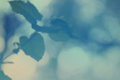 blur-dreamy-texture-texturepalace-60 (texturepalace) Tags: blur color leaves cc creativecommons dreamtextures texturepalace blurtextures
