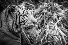 Pairi Daiza - Vendredi 1 Avril 2016 (Thomas Mathues) Tags: park animals animaux parc hdr daiza pairi