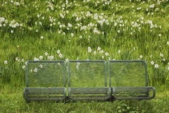 Happy Bench Monday with Jonquils! (suzanne.gibson) Tags: park flowers grass bench spring outdoor jonquils