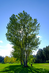 The Tree (Jon Erdmann) Tags: park trees grass landscape montana kalispell