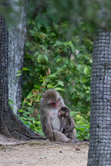 Maternit (Bloui) Tags: baby animal mammal zoo mother august qubec macaque japanesemacaque 2015 macacafuscata stflicien borealie saintflicien macaquejaponais zoosauvage eos7d boralie