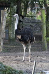 avifauna_301215_261 (Bellcaunion) Tags: park nature birds animals zoo vogels cage rijn avifauna alphen