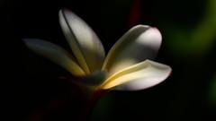 DSC_5353_13484 (miwin) Tags: light sun plant flower color art nature colors grancanaria garden europe blossom bokeh outdoor sunny depthoffield botanicalgarden thelook
