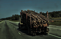 Toothpicks for Mr. Kong (raymondclarkeimages) Tags: wood trees usa truck canon highway outdoor timber logging toothpicks transportation 7d poles lumber trucking tractortrailer 2470mm raymondclarkeimages 8one8studios