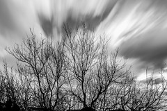 NUVOLE NEL VENTO !! (antoninao) Tags: white plant black tree monochrome field grass clouds canon landscape nuvole outdoor mark calm ii 5d depth plot paesaggio 5dmarkiii